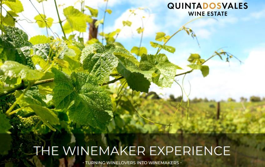 THE WINEMAKER EXPERIENCE